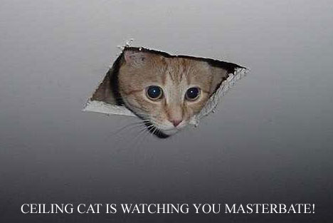 ceiling cat watches you masturbate